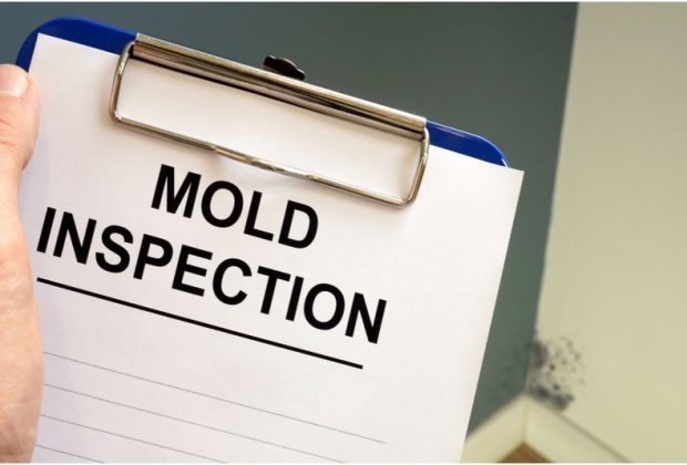 Mold inspection process explained